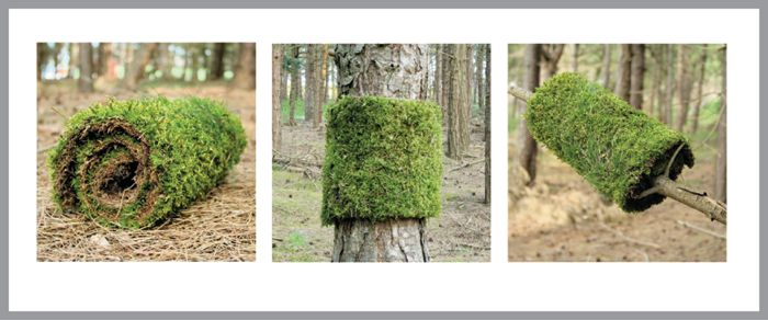 Cutting out a grass sod from the forest and attaching it to a tree